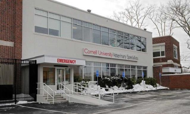 cornell-vet-center